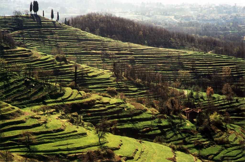 Parco di Montevecchia : Progetti : Valorizzazione del paesaggio rurale